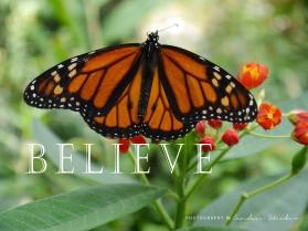 09-believe-monarchbutterfly-2500