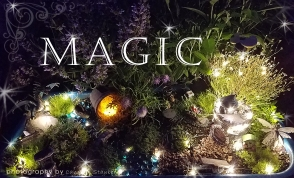14-fairygarden-magic-2500
