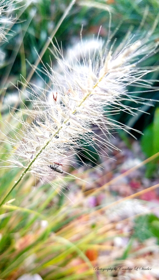 20161023_decorativegrass