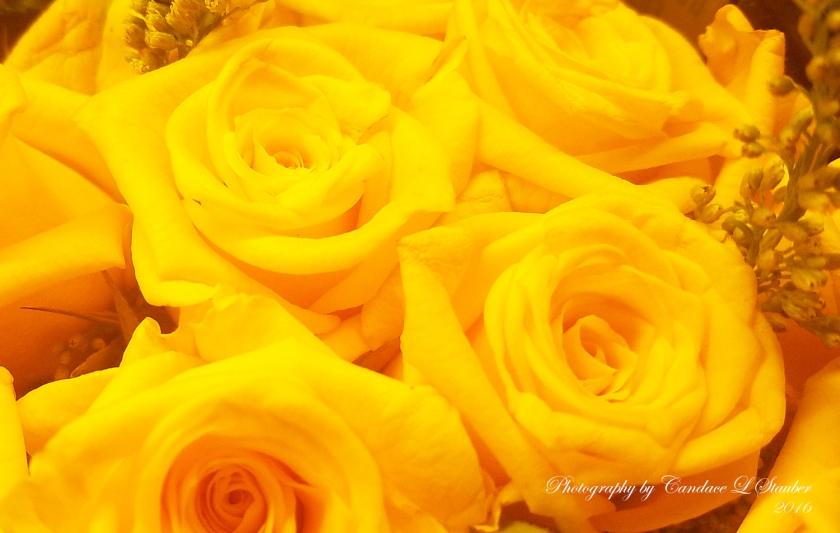 20161024_yellowroses1500