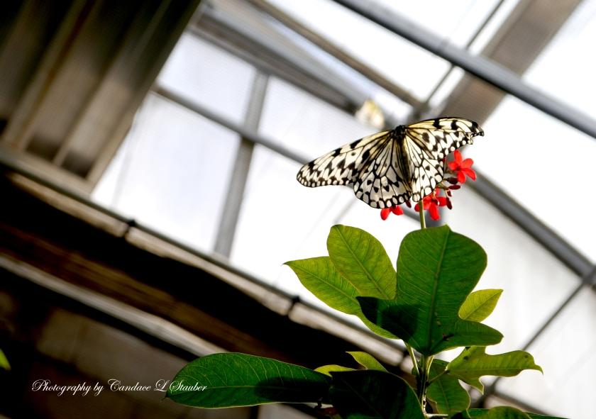 2016-09-20_butterflywindow
