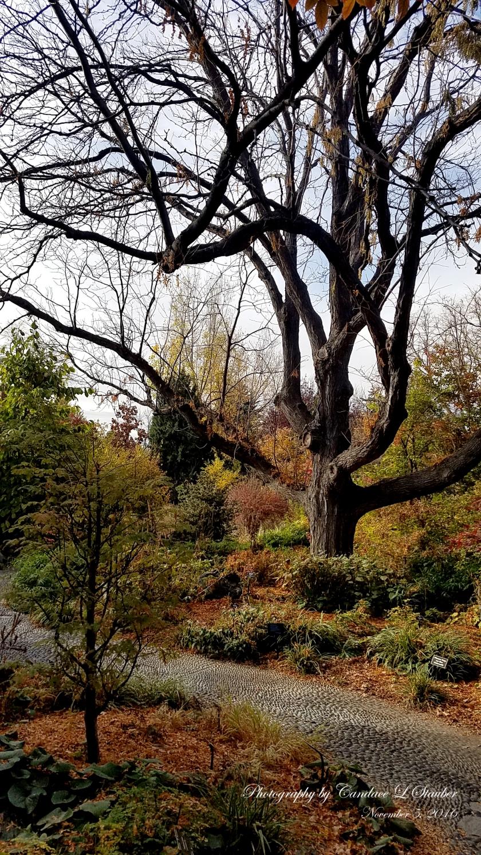20161105_100508-Tree1-DBG.jpg