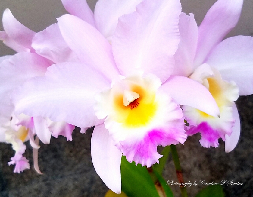 20161105_160853-orchid