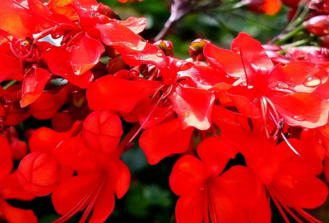 20161105_tropical-reds