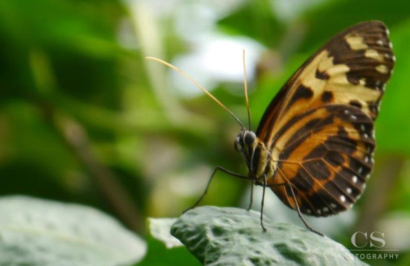 butterfly-macro1