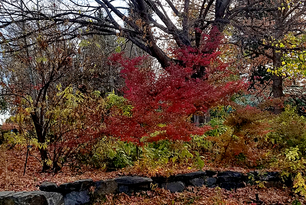 20161105_dbgtrees-1000