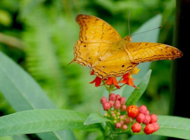 butterflypavillion2