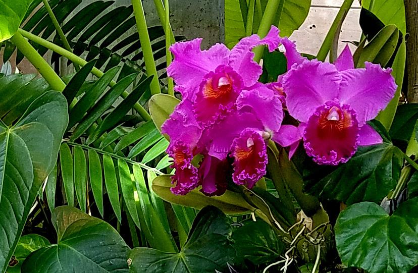 tropicalorchids20161105_103056
