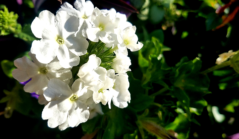 white-floral-20161023_165607-800