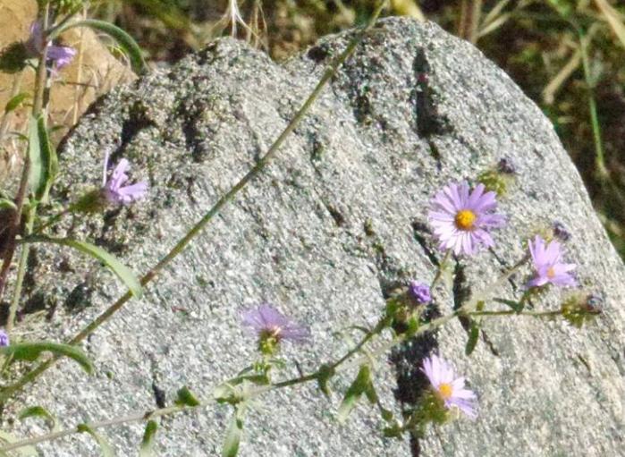 00-wildflowerslairofthebear-flowers2