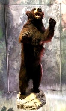 21-rawsienna-bear