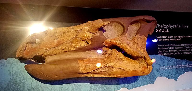 dinosaurskull20161029_113857_001-800