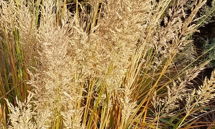 Color Your World –Golden Grass
