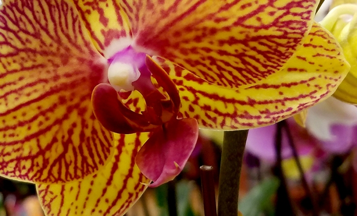 orchid320170109_164215_001-800