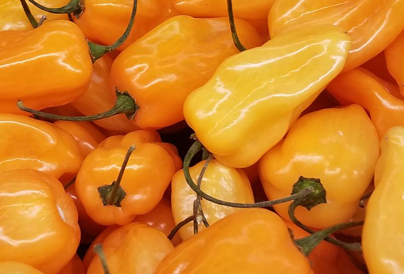 pepper-orange-yellow20170109_163257-800