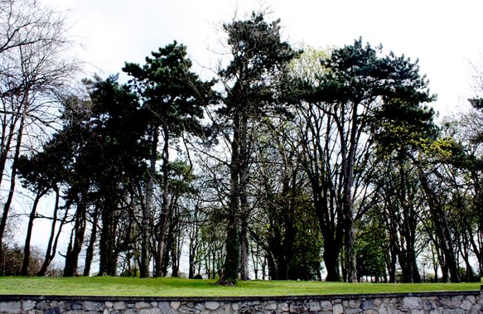 StandofTrees-DumfriesScotland20090407_54-800.jpg