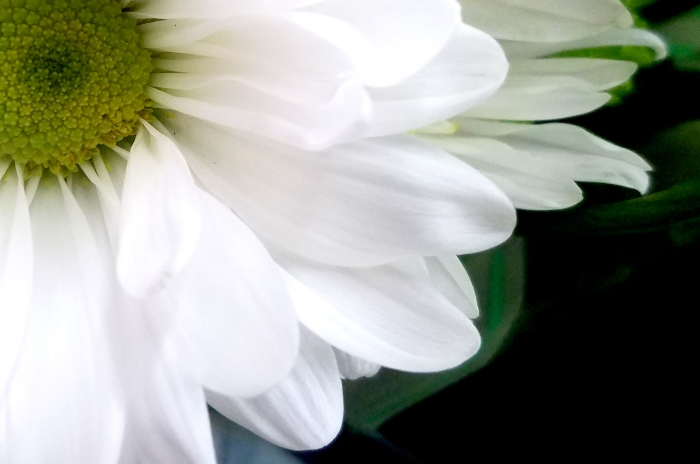 whitemum-120170129_112242