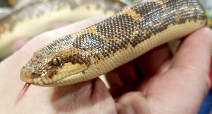 0-snake