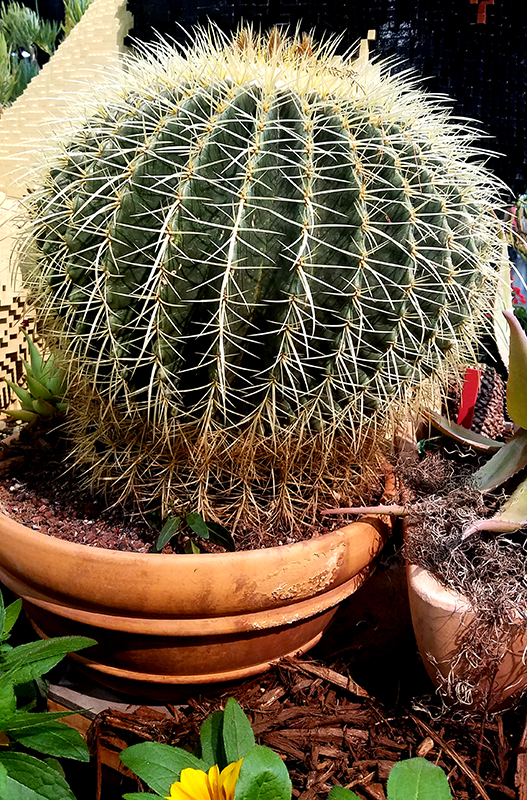 cactus-800-20170205_132355-1