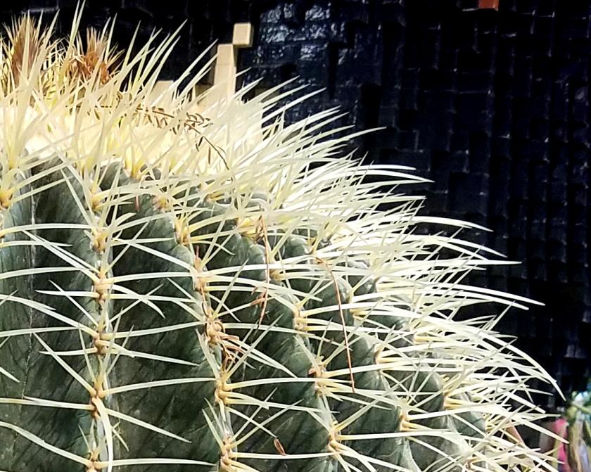 cactus-macro-20170205_132355