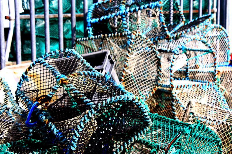 lobstertraps-800-20090403_41