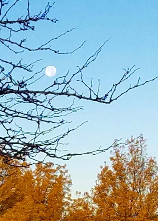 morning-moonset-20161017_075613