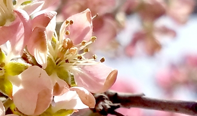 00-pink-1-macro-20170325_105758