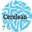 0307-4fbdde-cereleun