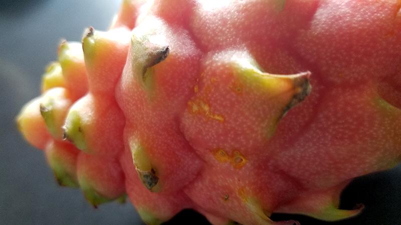 16-ticklemepink-romanaeco-fruit-20170322_162032-800