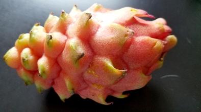 romanaeco-fruit-20170322_162050-800