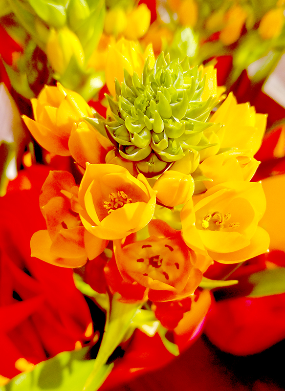 yellow-orange20170326_134142-800