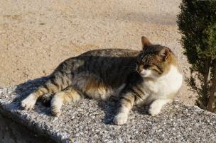cat3-800-DSC00253