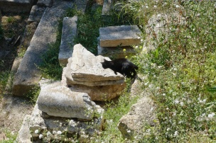 cats2-800-DSC00382