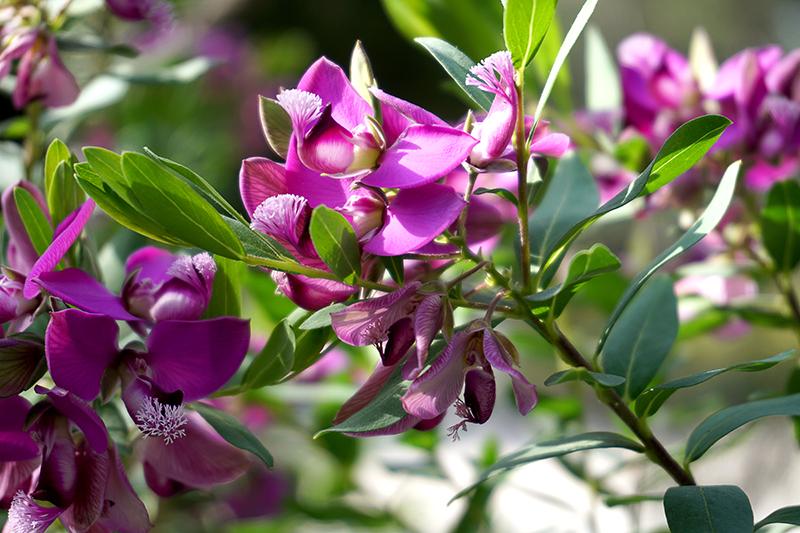 floral-800-DSC00244