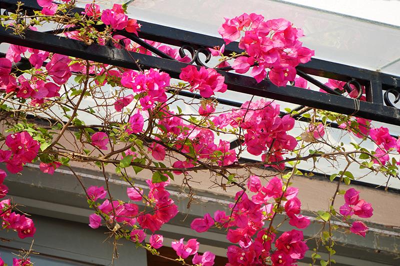 floral-DSC00411