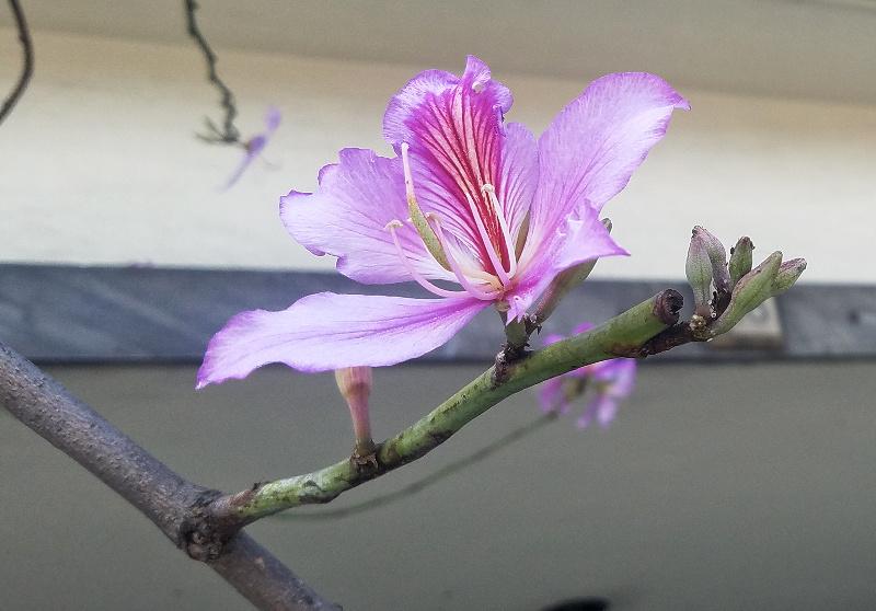 floral-pink-20170413_154332-800
