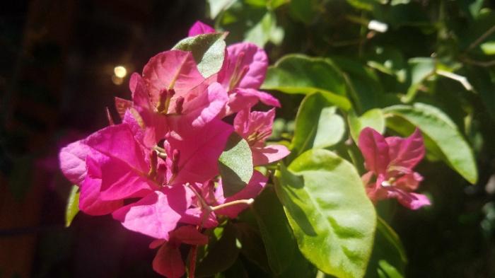 pinksherbet-800-20170415_143417