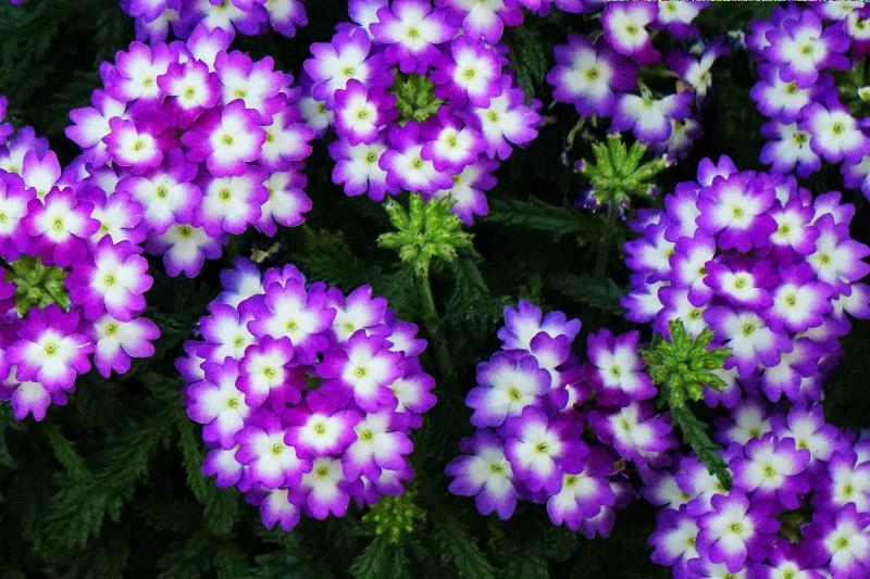 purplewhite-container-DSC00038-800
