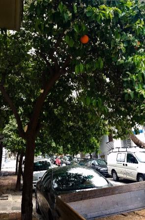 trees-1-20170407_133106-800