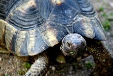 turtle-DSC00303-800