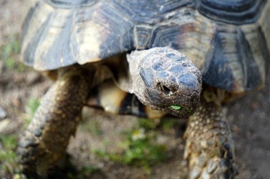 turtle-DSC00306-800