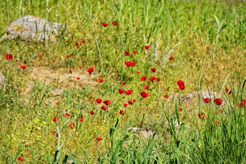 wildflowersDSC00527-800
