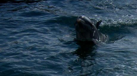00-dolphin100_1248