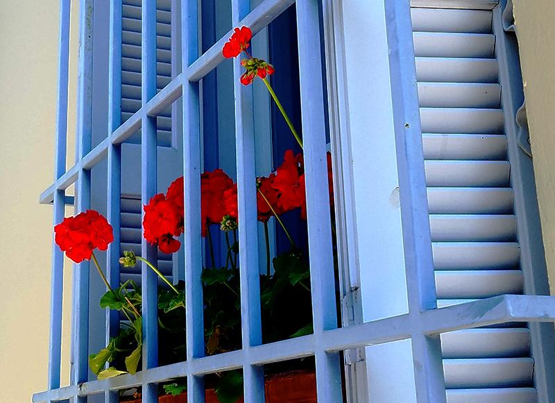 00-windowbox-20170415_122936A-800