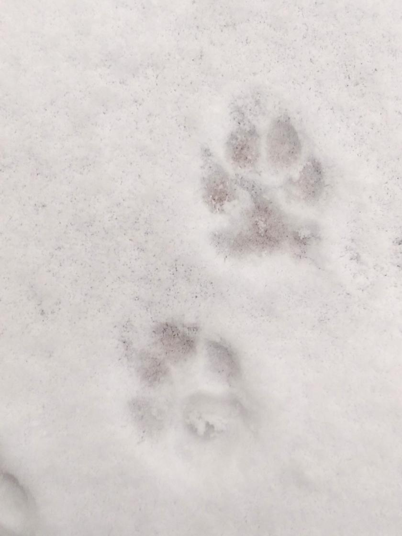 puppyprintsWP_20160119_001