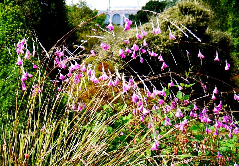 purpleflowers-scotland-P1000134-1000