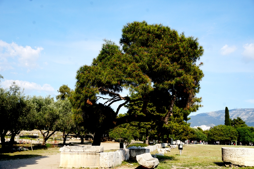 TreelinedPathofTemple of Zeus-DSC00334-800