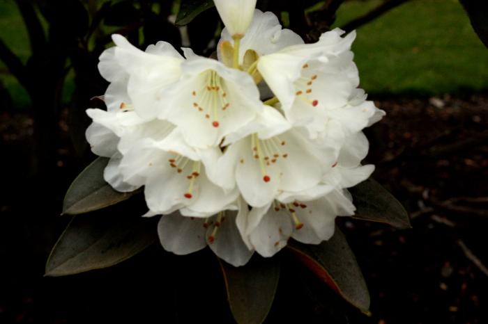 whiteflowers-1000-20090406_180