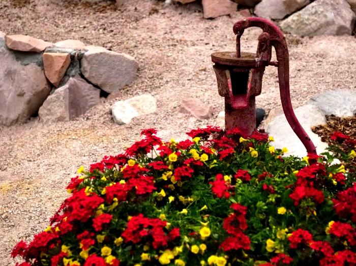 flowers-DSC02503