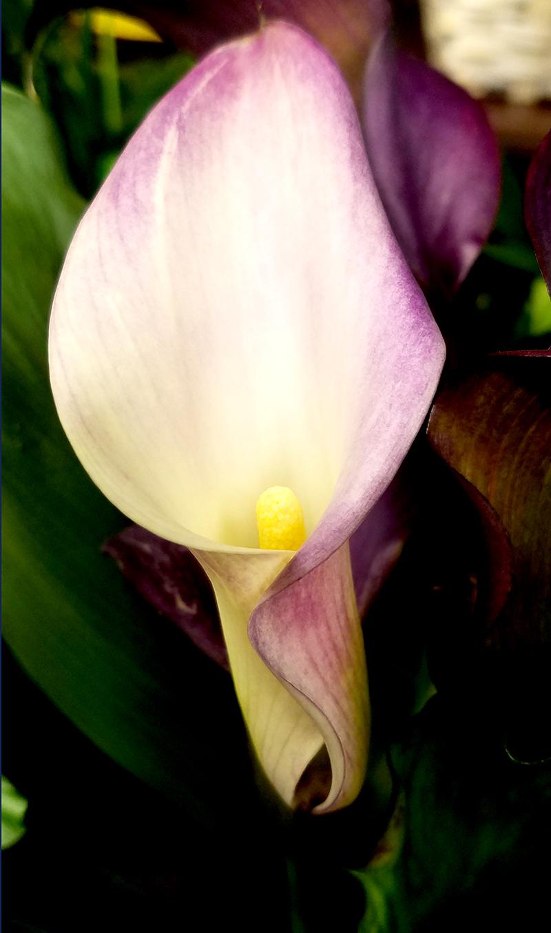 lilyfloral06112017-800